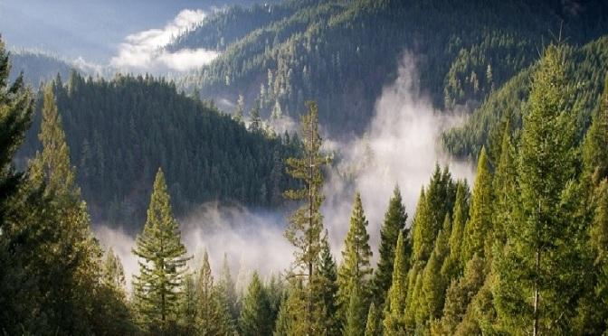 Orman İçi Dinlenme Alanı Ne Demektir?