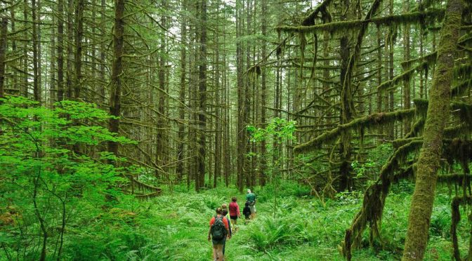 Ekoturizmin İlkeleri Nelerdir?