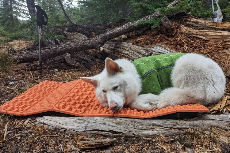 Eco rests in camp on a  NEMO Switchback  that we cut to size for her