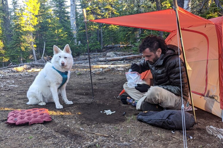 Give your dog lots of encouragement on backpacking trips so they can build confidence