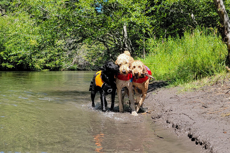 Keeping your dog in tip-top shape will help ensure you both have a great experience on your adventures together