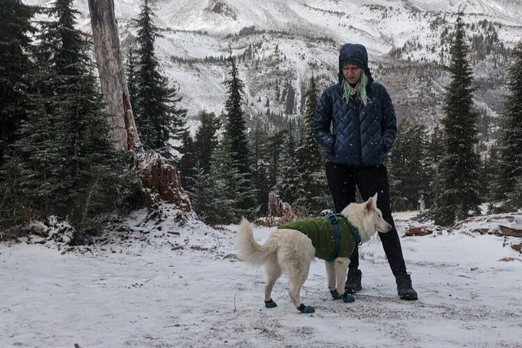 It's best to put  boots  or  Musher's Wax   on your dog's paws in icy conditions