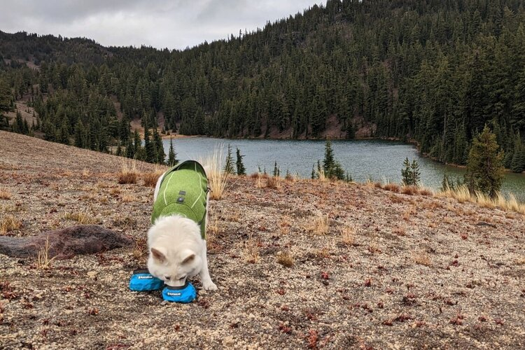When backpacking, we pack along Ruffwear's ultralight and compact  Trail Runner Bowls