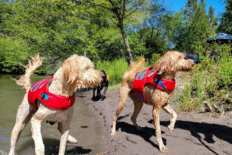 """Taking proper precautions, like putting your dog in a  life jacket  around deep or fast moving water, will help ensure your  first aid kit  remains a """"just-in-a-case item"""""""