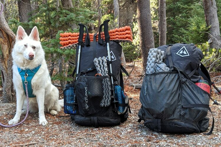 A long hike is an excellent way to build upon a great relationship with your dog